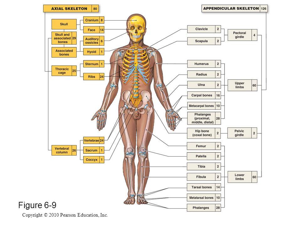 Copyright © 2010 Pearson Education, Inc. Figure 6-9