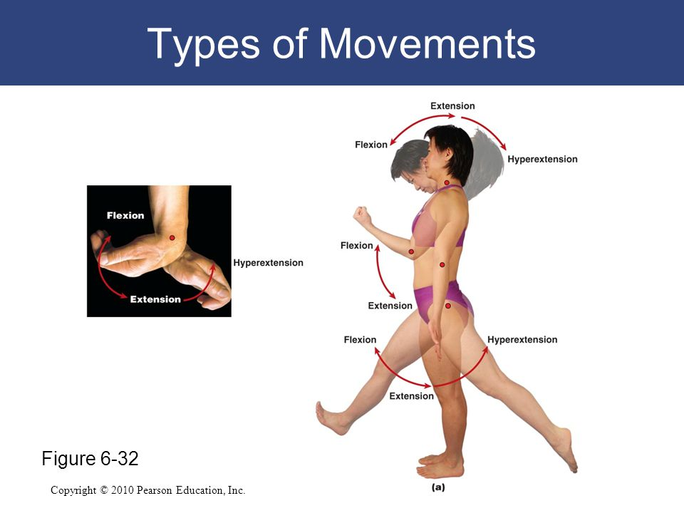Copyright © 2010 Pearson Education, Inc. Types of Movements Figure 6-32