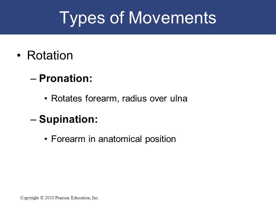 Copyright © 2010 Pearson Education, Inc. Types of Movements Rotation –Pronation: Rotates forearm, radius over ulna –Supination: Forearm in anatomical