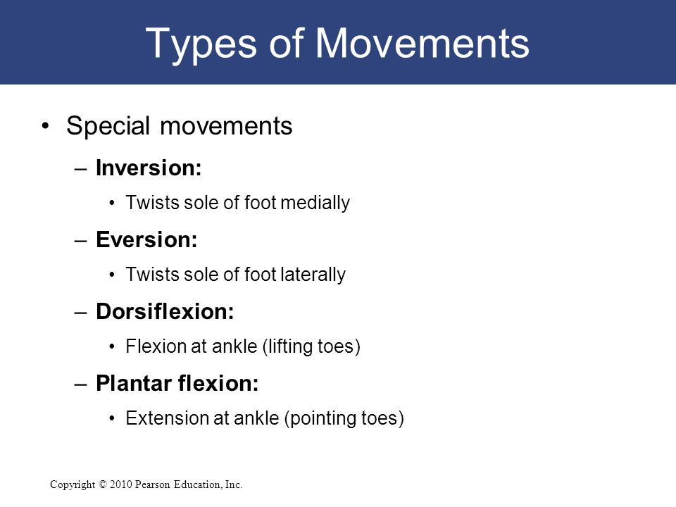Copyright © 2010 Pearson Education, Inc. Types of Movements Special movements –Inversion: Twists sole of foot medially –Eversion: Twists sole of foot