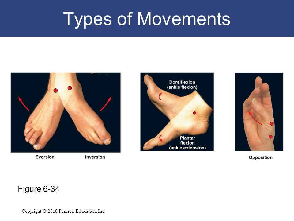 Copyright © 2010 Pearson Education, Inc. Types of Movements Figure 6-34