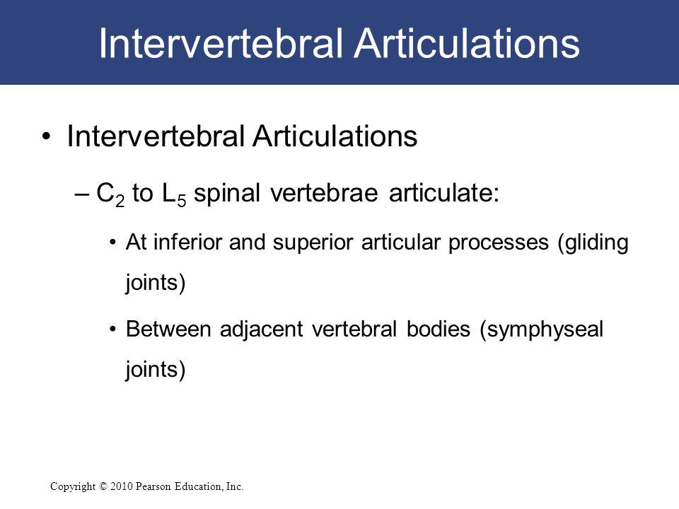 Copyright © 2010 Pearson Education, Inc. Intervertebral Articulations –C 2 to L 5 spinal vertebrae articulate: At inferior and superior articular proc