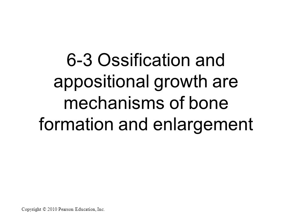 Copyright © 2010 Pearson Education, Inc. 6-3 Ossification and appositional growth are mechanisms of bone formation and enlargement
