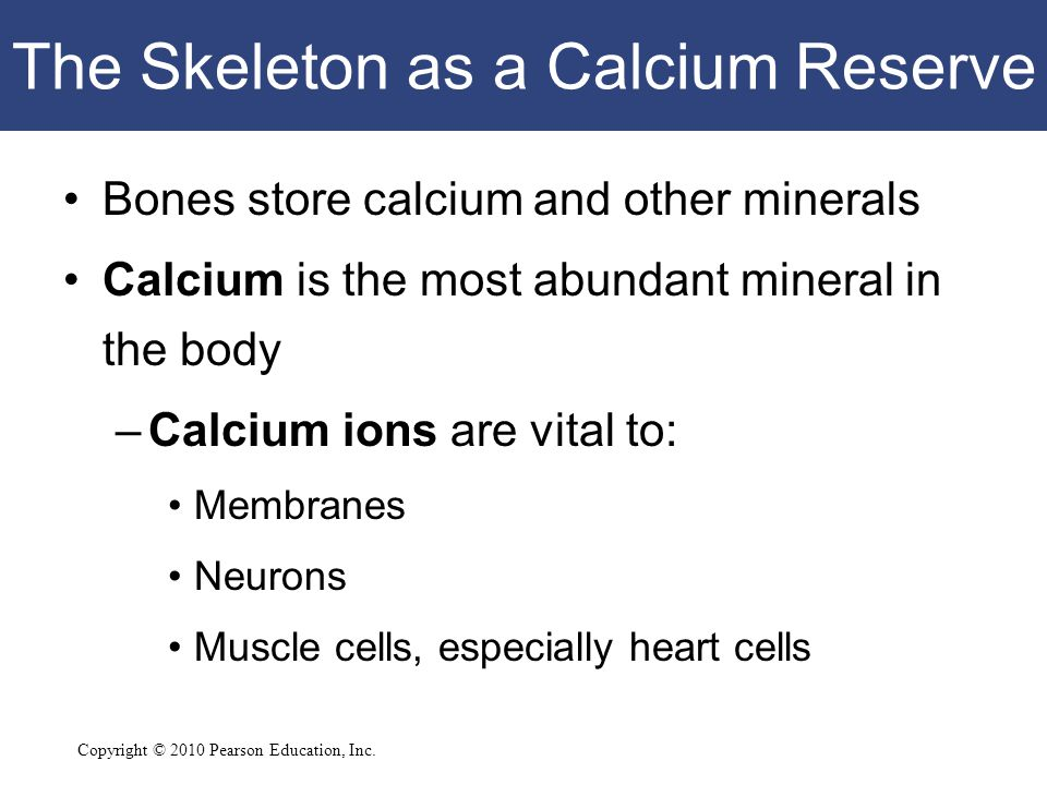 Copyright © 2010 Pearson Education, Inc. The Skeleton as a Calcium Reserve Bones store calcium and other minerals Calcium is the most abundant mineral
