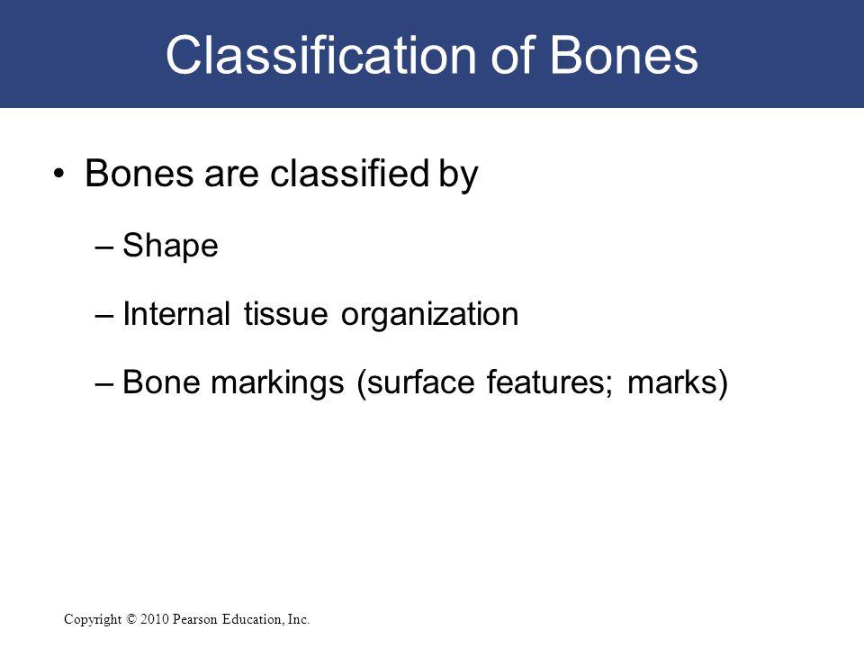 Copyright © 2010 Pearson Education, Inc. Classification of Bones Bones are classified by –Shape –Internal tissue organization –Bone markings (surface