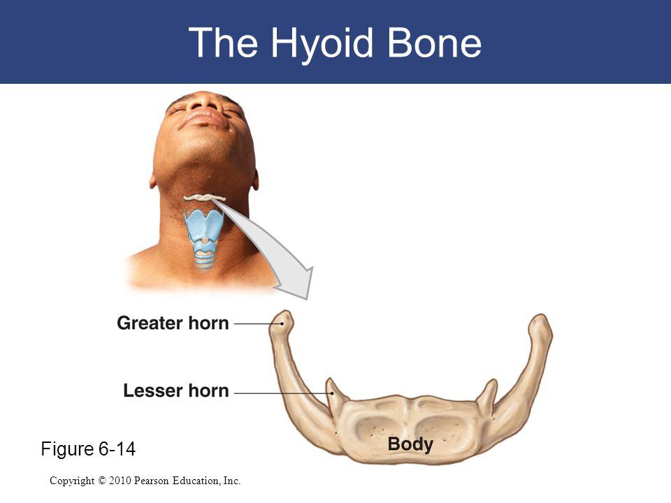 Copyright © 2010 Pearson Education, Inc. The Hyoid Bone Figure 6-14