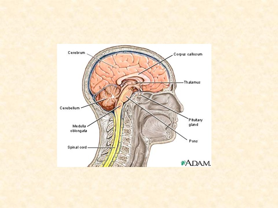 Determining Brain Death 4 Approach Steps: – Establish irreversible and proximate causes of coma (i.e.