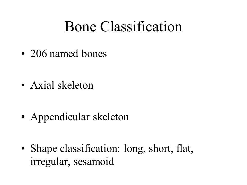 Bone Classification 206 named bones Axial skeleton Appendicular skeleton Shape classification: long, short, flat, irregular, sesamoid