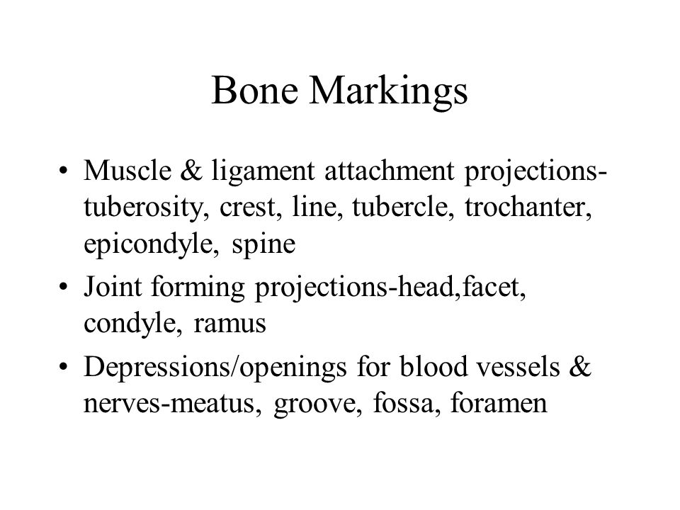 Bone Markings Muscle & ligament attachment projections- tuberosity, crest, line, tubercle, trochanter, epicondyle, spine Joint forming projections-hea