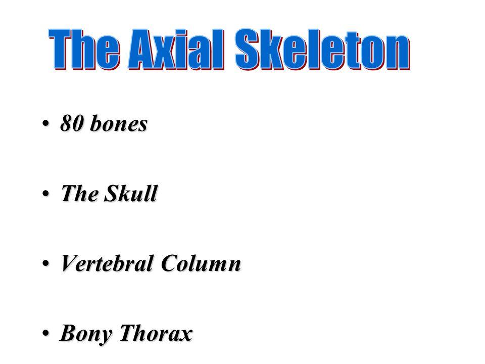 80 bones80 bones The SkullThe Skull Vertebral ColumnVertebral Column Bony ThoraxBony Thorax