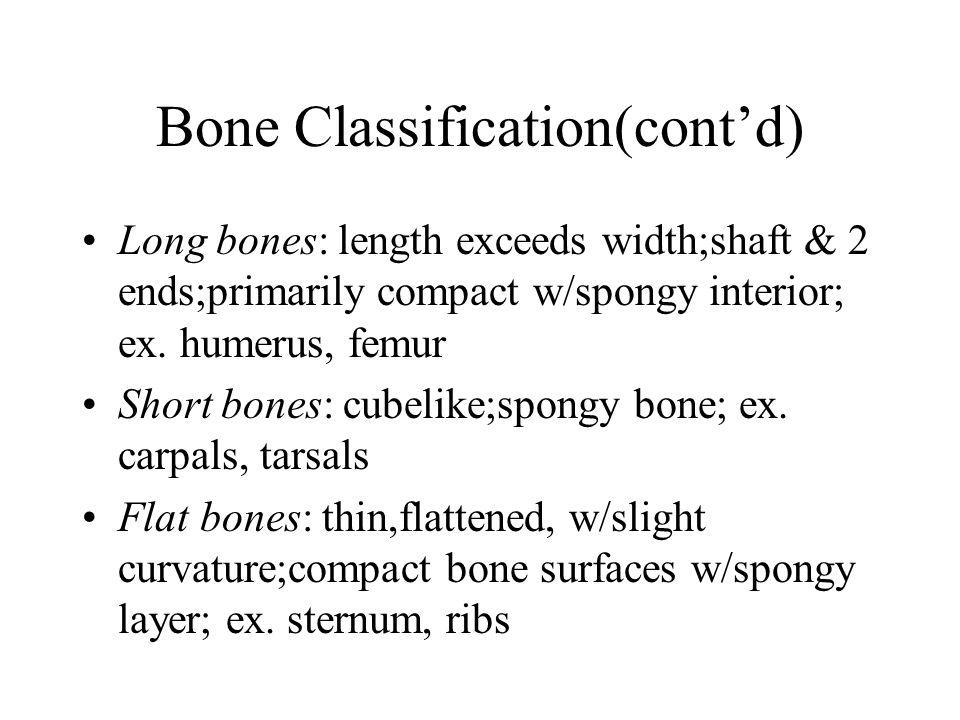 Bone Classification(cont'd) Long bones: length exceeds width;shaft & 2 ends;primarily compact w/spongy interior; ex. humerus, femur Short bones: cubel
