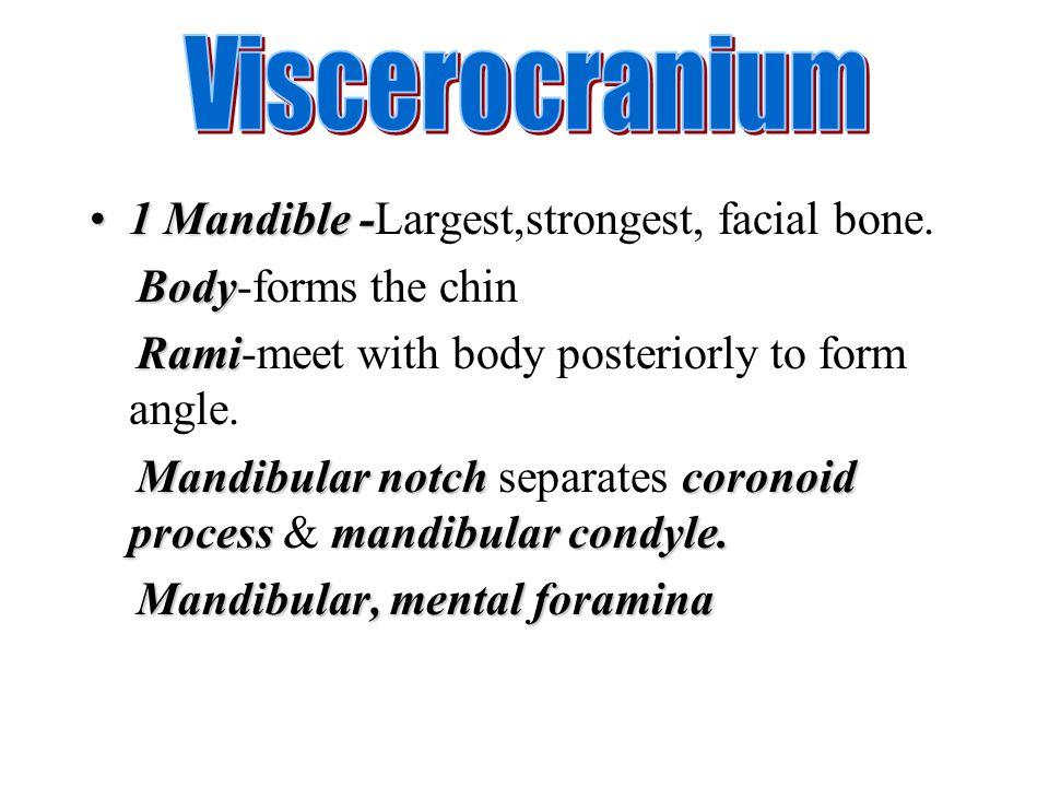 1 Mandible-1 Mandible -Largest,strongest, facial bone. Body Body-forms the chin Rami Rami-meet with body posteriorly to form angle. Mandibular notchco