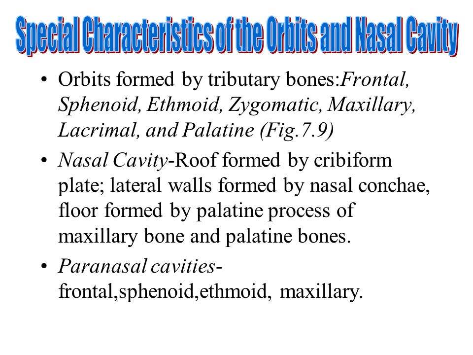Orbits formed by tributary bones:Frontal, Sphenoid, Ethmoid, Zygomatic, Maxillary, Lacrimal, and Palatine (Fig.7.9) Nasal Cavity-Roof formed by cribif