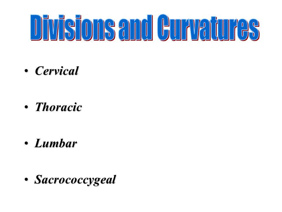 CervicalCervical ThoracicThoracic LumbarLumbar SacrococcygealSacrococcygeal