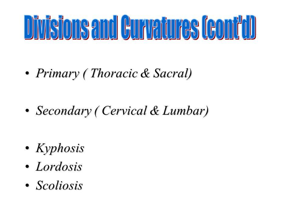 Primary ( Thoracic & Sacral)Primary ( Thoracic & Sacral) Secondary ( Cervical & Lumbar)Secondary ( Cervical & Lumbar) KyphosisKyphosis LordosisLordosi