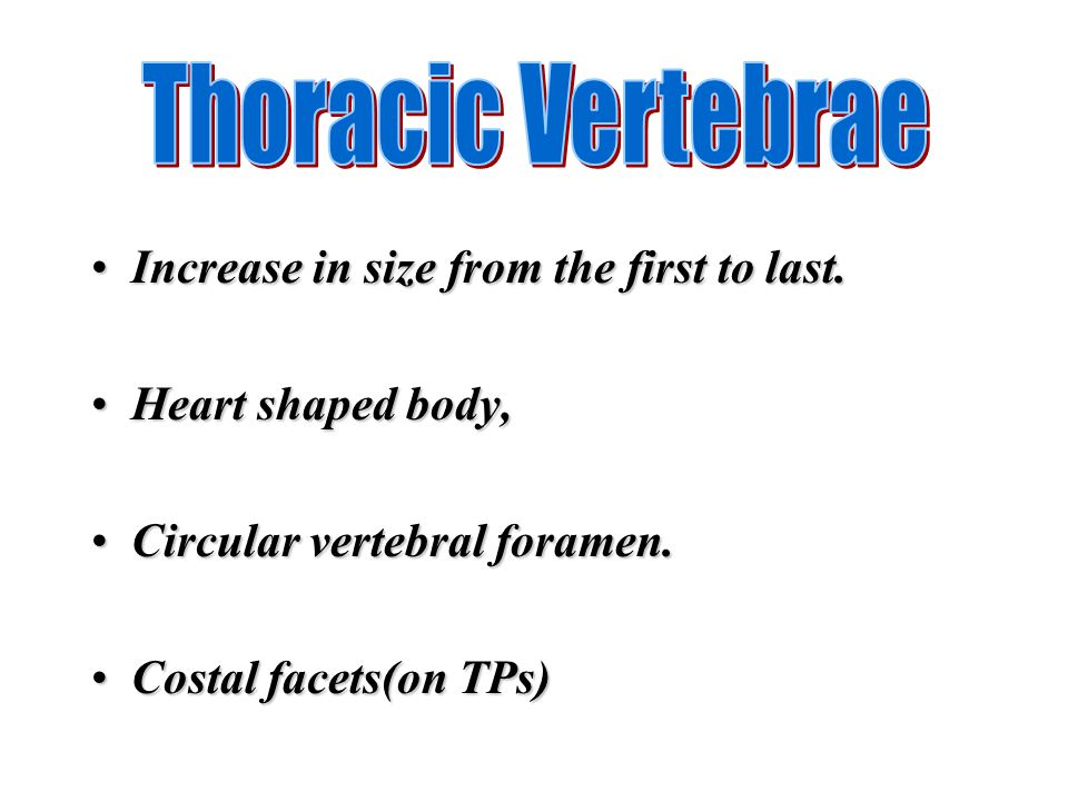 Increase in size from the first to last.Increase in size from the first to last. Heart shaped body,Heart shaped body, Circular vertebral foramen.Circu