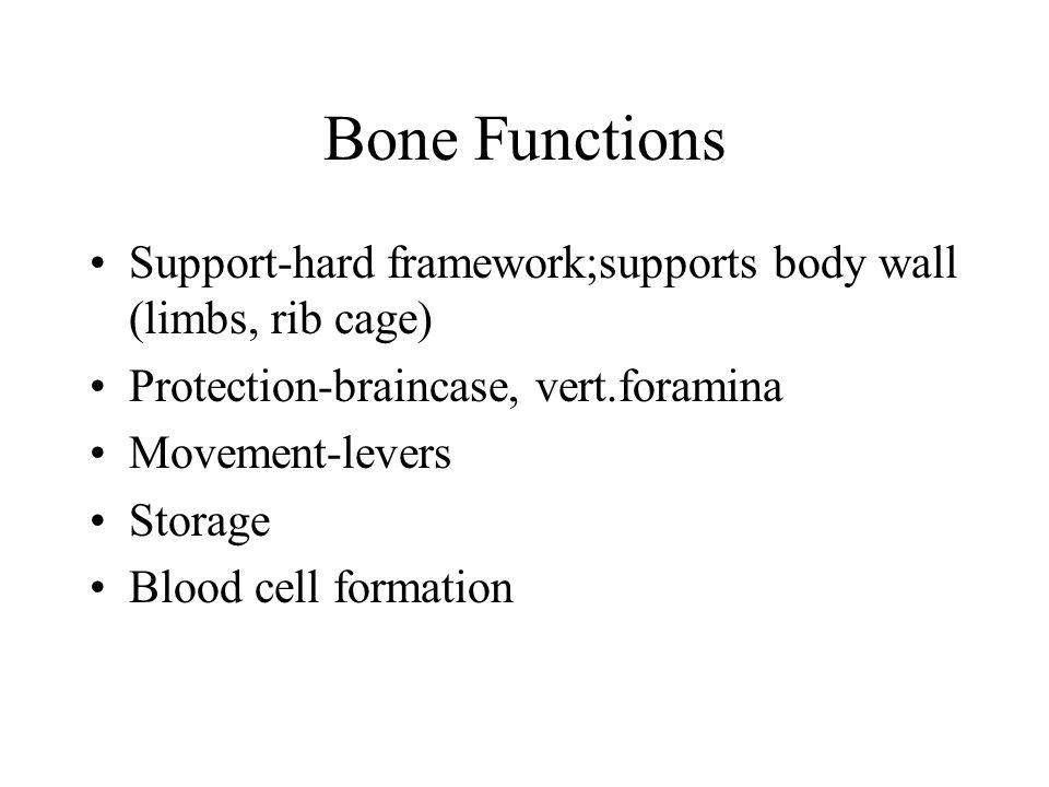 2 Zygomatic Bones– C2 Zygomatic Bones – Cheekbones ;articulates with temporal bones via zygomatic arch.