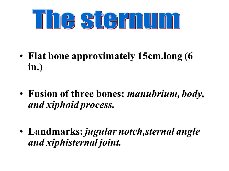 Flat bone approximately 15cm.long (6 in.) Fusion of three bones: manubrium, body, and xiphoid process. Landmarks: jugular notch,sternal angle and xiph