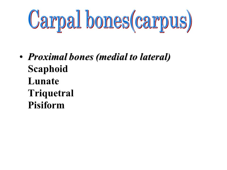 Proximal bones (medial to lateral)Proximal bones (medial to lateral) Scaphoid Lunate Triquetral Pisiform