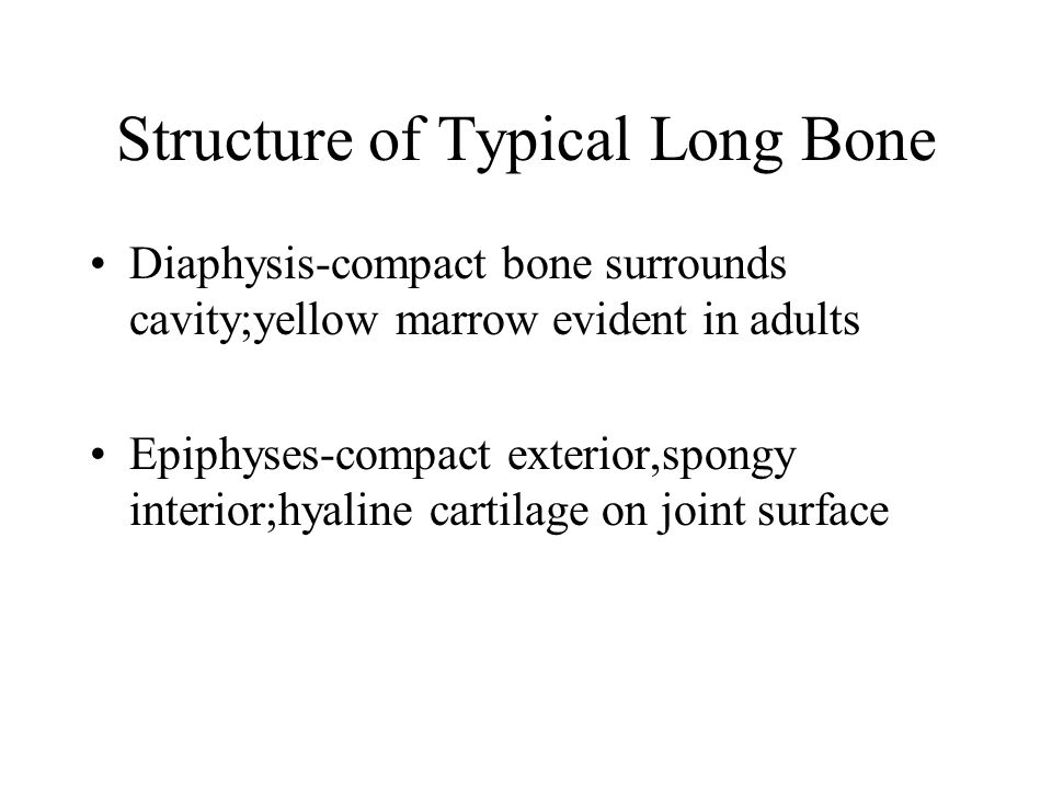 Structure of Typical Long Bone Diaphysis-compact bone surrounds cavity;yellow marrow evident in adults Epiphyses-compact exterior,spongy interior;hyal