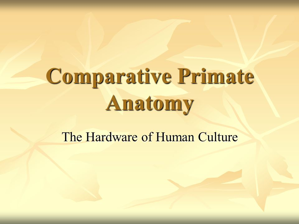 Comparative Primate Anatomy The Hardware of Human Culture