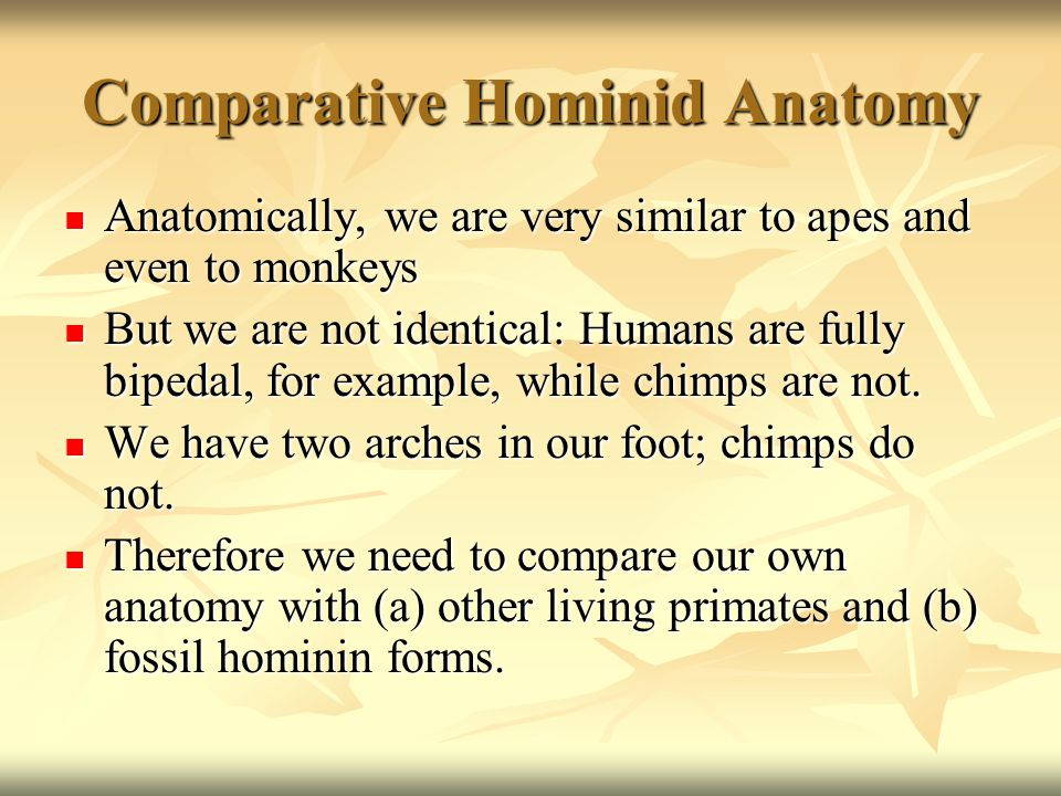 Comparative Human Anatomy: Locomotion You will need to make a close comparison of human and chimp anatomy in the next diagram You will need to make a close comparison of human and chimp anatomy in the next diagram Pelvis: Compare the length of the ilium of the chimp with that of the human Pelvis: Compare the length of the ilium of the chimp with that of the human Compare the arm length of the chimp with the human Compare the arm length of the chimp with the human Compare the leg bones of the chimp with the human Compare the leg bones of the chimp with the human Compare the foot structure of the chimp with the human Compare the foot structure of the chimp with the human What are the differences between each set of characteristics.