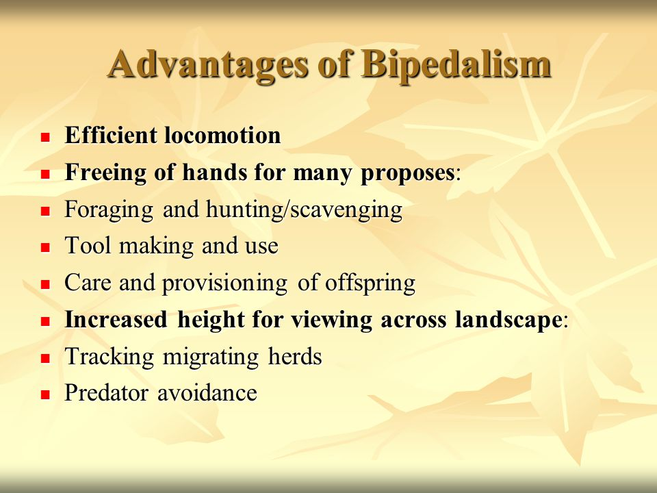 Advantages of Bipedalism Efficient locomotion Efficient locomotion Freeing of hands for many proposes: Freeing of hands for many proposes: Foraging and hunting/scavenging Foraging and hunting/scavenging Tool making and use Tool making and use Care and provisioning of offspring Care and provisioning of offspring Increased height for viewing across landscape: Increased height for viewing across landscape: Tracking migrating herds Tracking migrating herds Predator avoidance Predator avoidance
