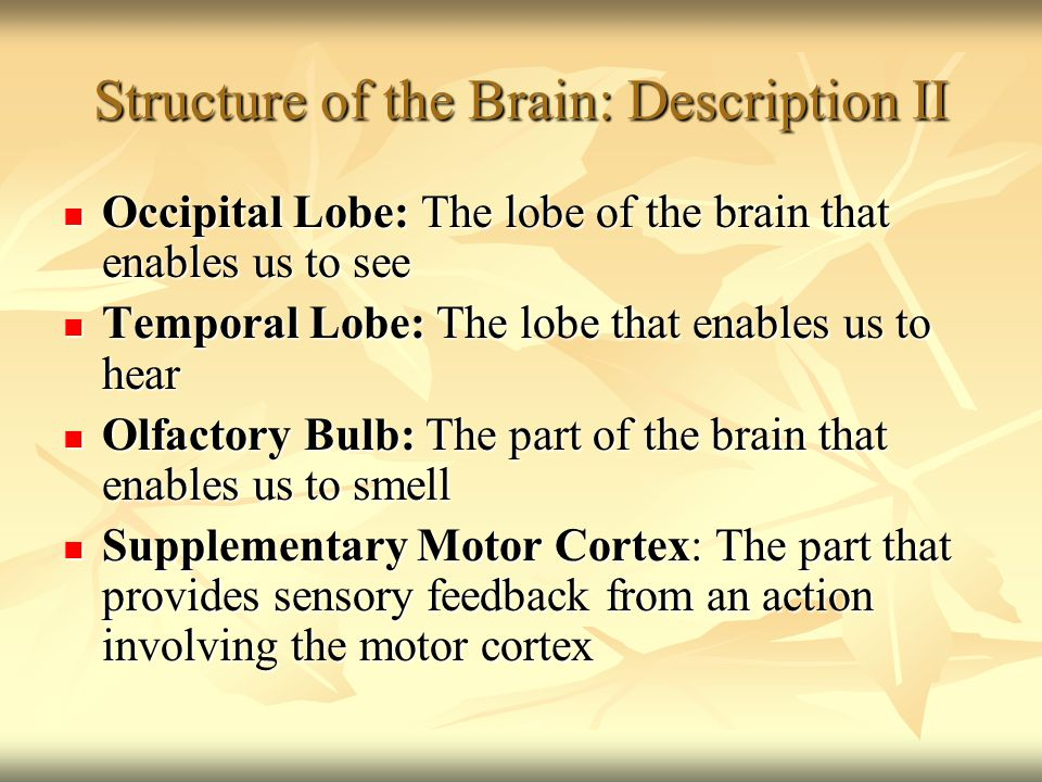 Structure of the Brain: Diagram Structure of the Brain: Diagram Frontal Lobe and Motor Cortex: Frontal Lobe and Motor Cortex: Cognition: Thinking Ability Cognition: Thinking Ability Motor Abilities Motor Abilities Parietal Lobe: Touch and Taste Parietal Lobe: Touch and Taste Temporal Lobe: Hearing Temporal Lobe: Hearing Occipital Lobe: Vision Occipital Lobe: Vision Olfactory Bulb: Smell Olfactory Bulb: Smell