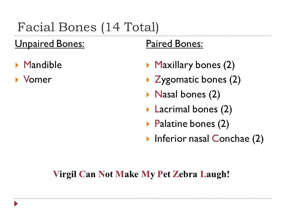 Facial Bones (14 Total) Unpaired Bones:  Mandible  Vomer Paired Bones:  Maxillary bones (2)  Zygomatic bones (2)  Nasal bones (2)  Lacrimal bones (2)  Palatine bones (2)  Inferior nasal Conchae (2) Virgil Can Not Make My Pet Zebra Laugh!