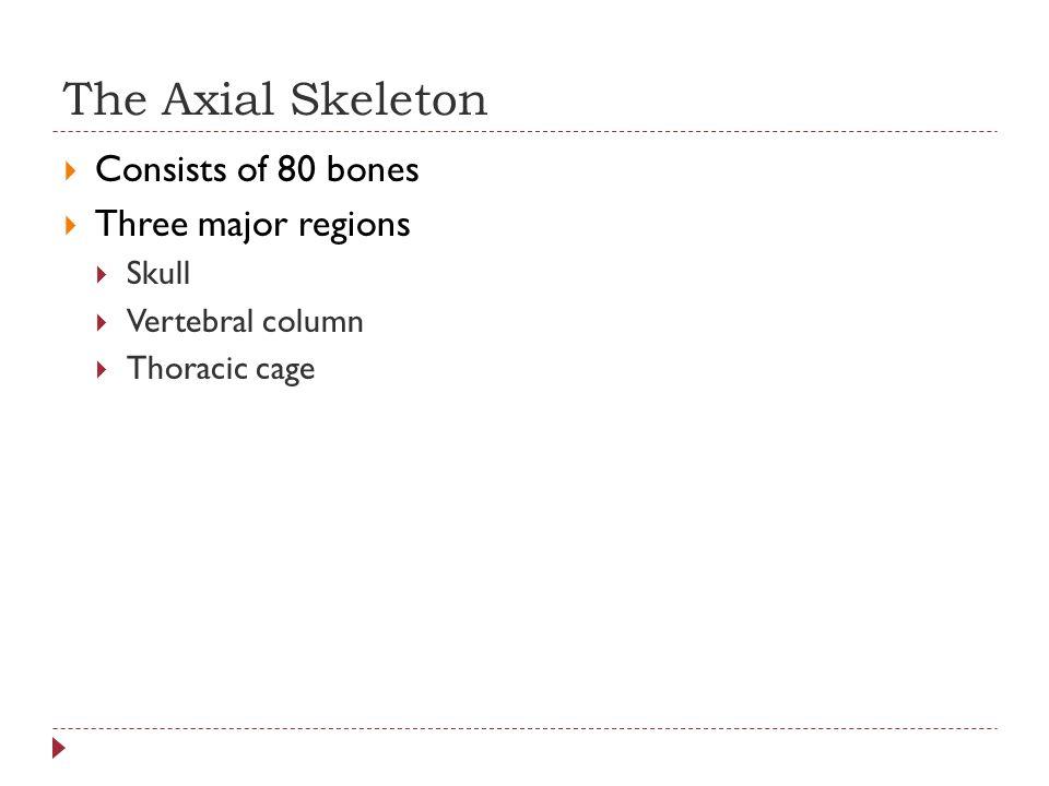 The Axial Skeleton  Consists of 80 bones  Three major regions  Skull  Vertebral column  Thoracic cage