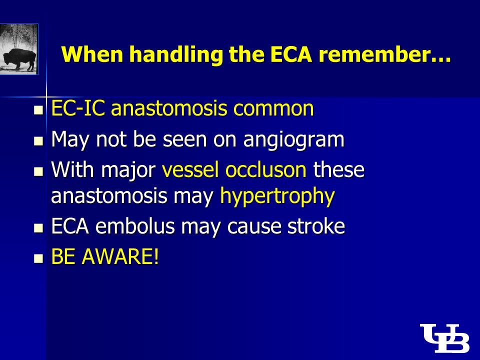 When handling the ECA remember… EC-IC anastomosis common EC-IC anastomosis common May not be seen on angiogram May not be seen on angiogram With major