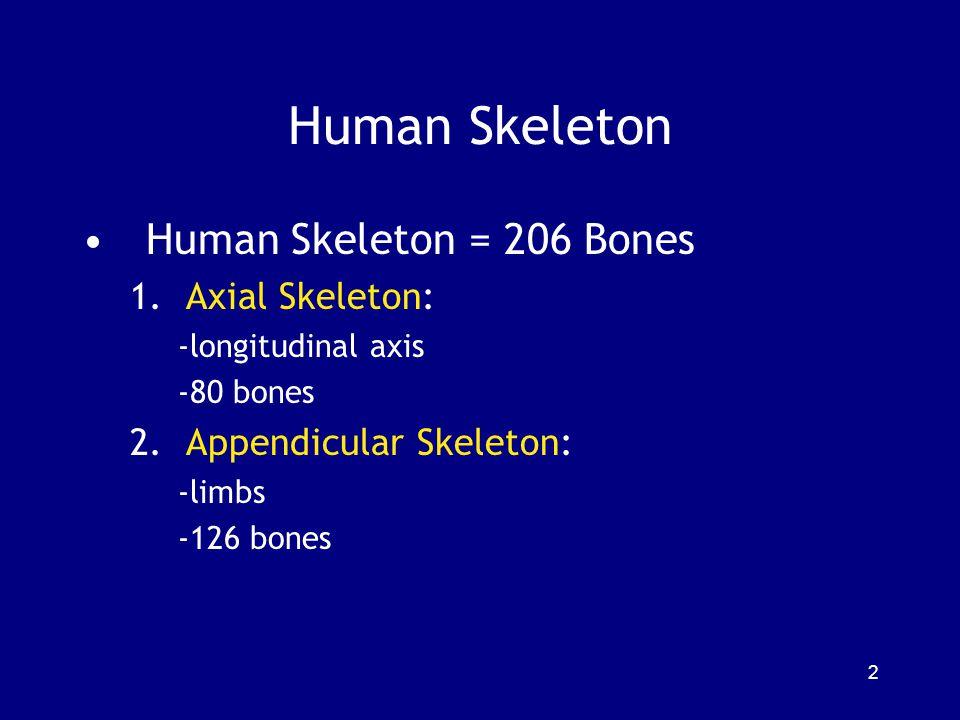 Human Skeleton Human Skeleton = 206 Bones 1.Axial Skeleton: -longitudinal axis -80 bones 2.Appendicular Skeleton: -limbs -126 bones 2
