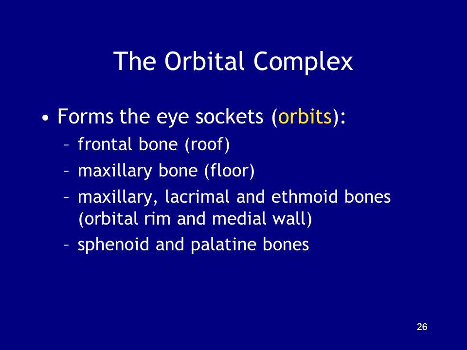 The Orbital Complex Forms the eye sockets (orbits): –frontal bone (roof) –maxillary bone (floor) –maxillary, lacrimal and ethmoid bones (orbital rim a