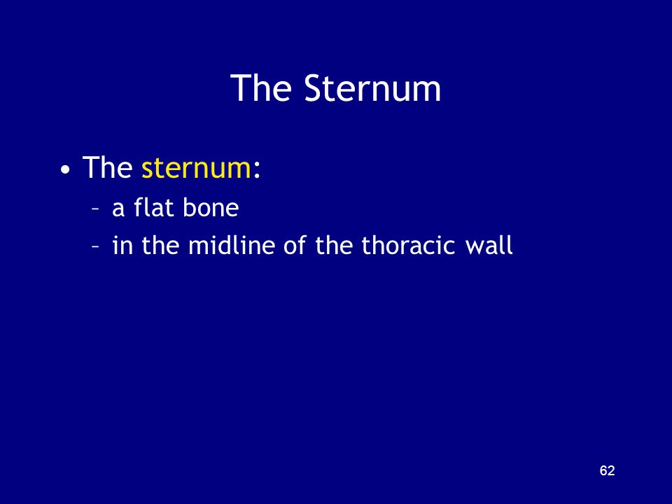 The Sternum The sternum: –a flat bone –in the midline of the thoracic wall 62