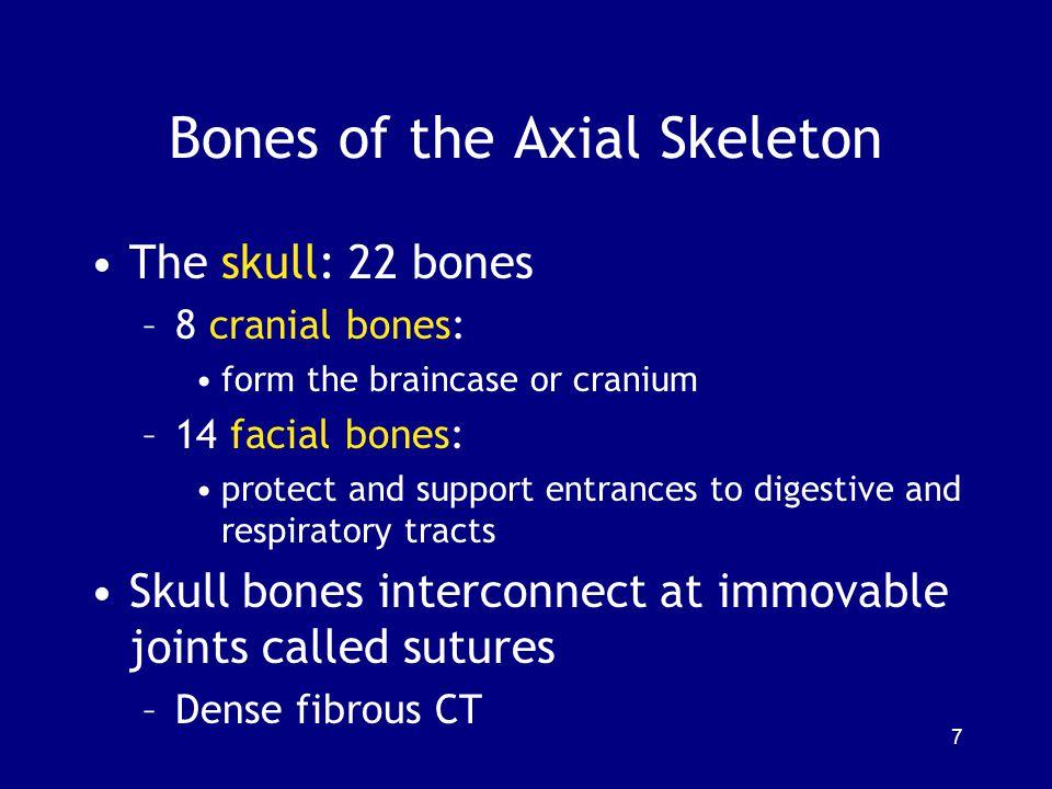 Bones of the Axial Skeleton The skull: 22 bones –8 cranial bones: form the braincase or cranium –14 facial bones: protect and support entrances to dig