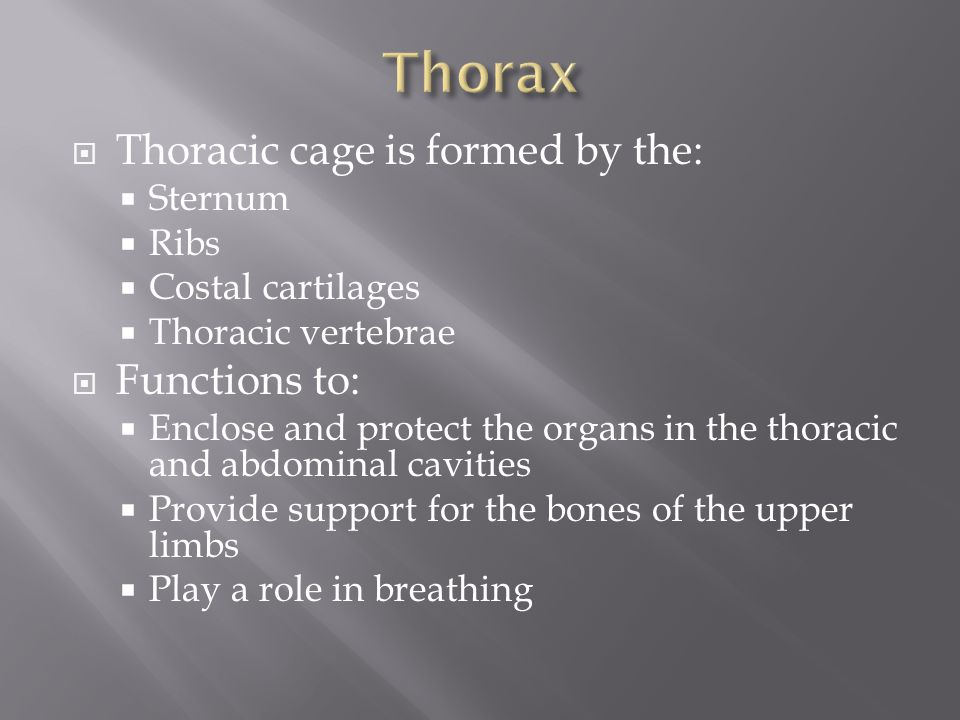  Thoracic cage is formed by the:  Sternum  Ribs  Costal cartilages  Thoracic vertebrae  Functions to:  Enclose and protect the organs in the th