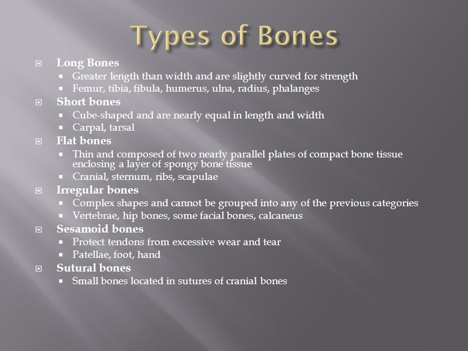  Long Bones  Greater length than width and are slightly curved for strength  Femur, tibia, fibula, humerus, ulna, radius, phalanges  Short bones 