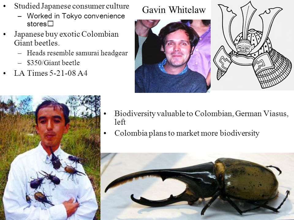 Studied Japanese consumer culture –Worked in Tokyo convenience stores Japanese buy exotic Colombian Giant beetles. –Heads resemble samurai headgear –$