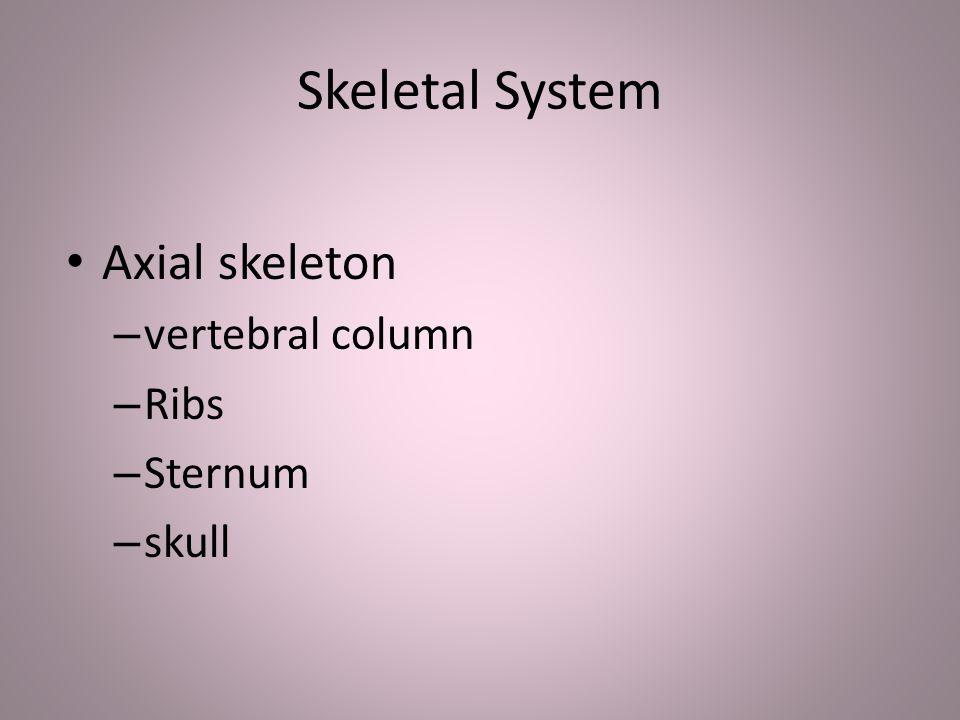 Skeletal System Axial skeleton – vertebral column – Ribs – Sternum – skull