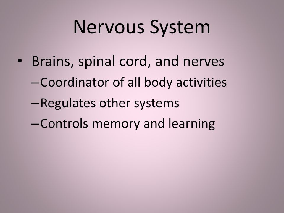 Nervous System Brains, spinal cord, and nerves – Coordinator of all body activities – Regulates other systems – Controls memory and learning