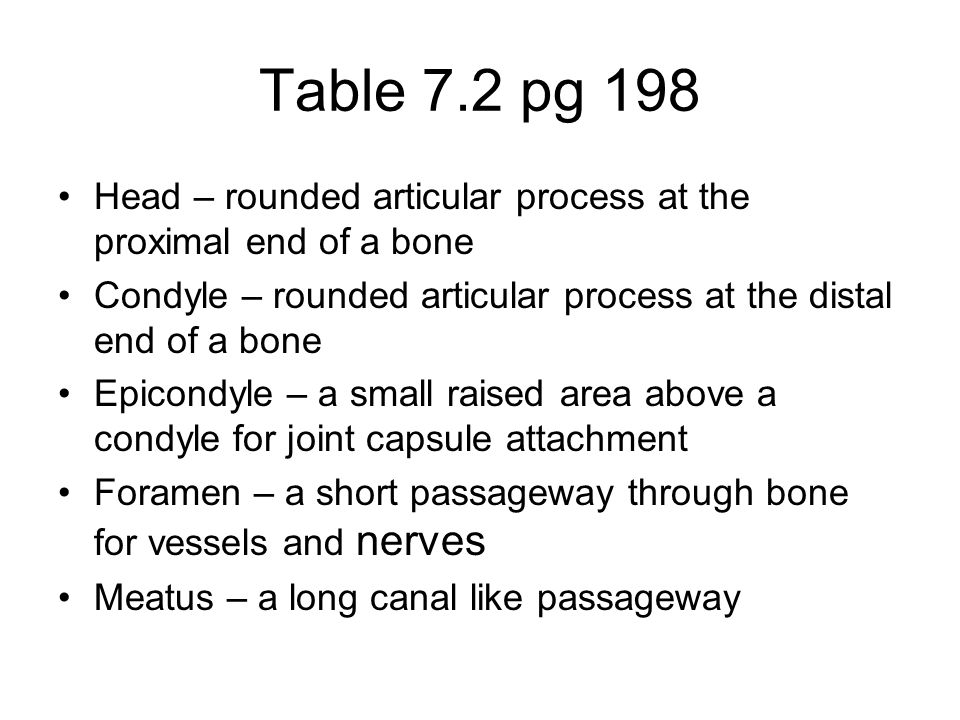 Table 7.2 pg 198 Head – rounded articular process at the proximal end of a bone Condyle – rounded articular process at the distal end of a bone Epicondyle – a small raised area above a condyle for joint capsule attachment Foramen – a short passageway through bone for vessels and nerves Meatus – a long canal like passageway