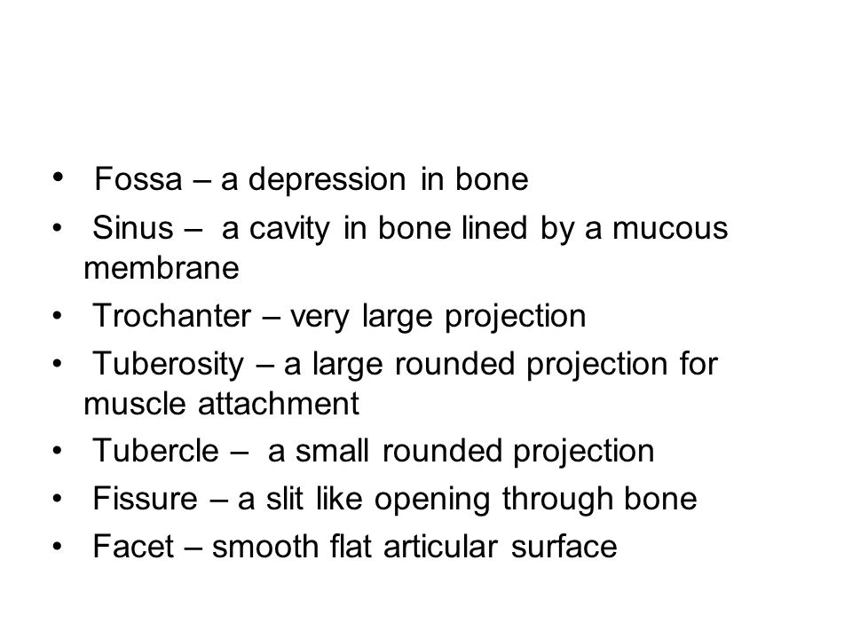Fossa – a depression in bone Sinus – a cavity in bone lined by a mucous membrane Trochanter – very large projection Tuberosity – a large rounded projection for muscle attachment Tubercle – a small rounded projection Fissure – a slit like opening through bone Facet – smooth flat articular surface