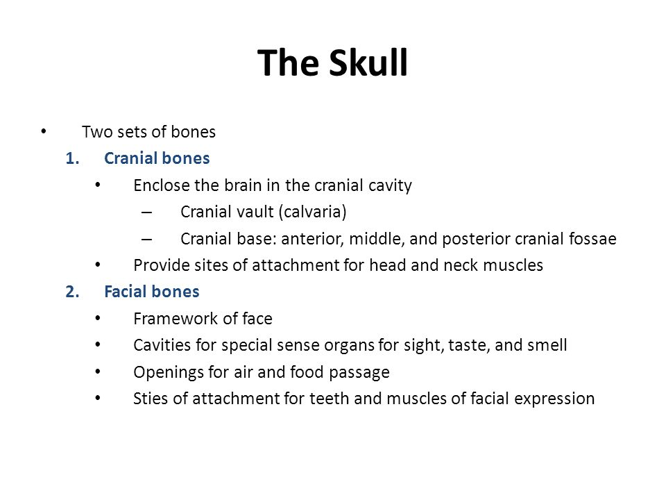 The Skull Two sets of bones 1.Cranial bones Enclose the brain in the cranial cavity – Cranial vault (calvaria) – Cranial base: anterior, middle, and p
