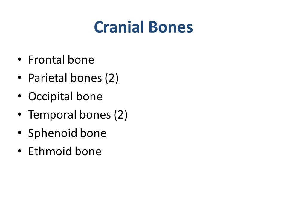 Cranial Bones Frontal bone Parietal bones (2) Occipital bone Temporal bones (2) Sphenoid bone Ethmoid bone