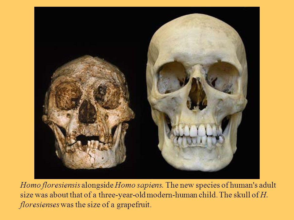 Homo floresiensis alongside Homo sapiens.