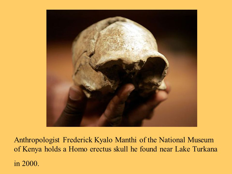 Anthropologist Frederick Kyalo Manthi of the National Museum of Kenya holds a Homo erectus skull he found near Lake Turkana in 2000.