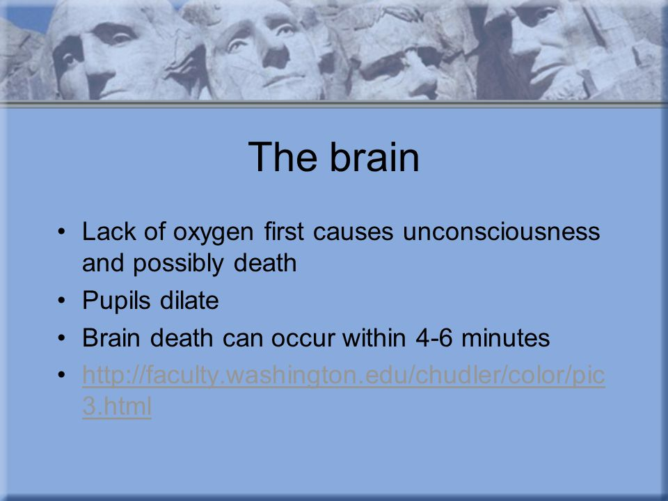The brain Lack of oxygen first causes unconsciousness and possibly death Pupils dilate Brain death can occur within 4-6 minutes http://faculty.washington.edu/chudler/color/pic 3.htmlhttp://faculty.washington.edu/chudler/color/pic 3.html