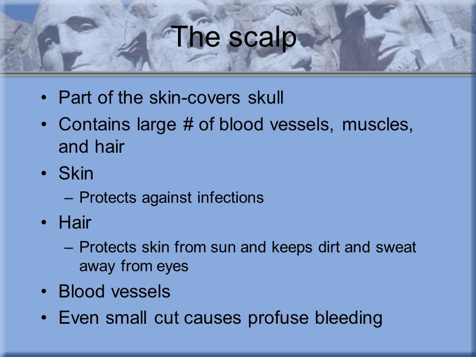 The scalp Part of the skin-covers skull Contains large # of blood vessels, muscles, and hair Skin –Protects against infections Hair –Protects skin from sun and keeps dirt and sweat away from eyes Blood vessels Even small cut causes profuse bleeding