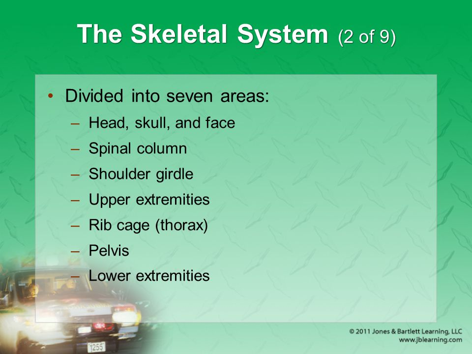 The Skeletal System (2 of 9) Divided into seven areas: –Head, skull, and face –Spinal column –Shoulder girdle –Upper extremities –Rib cage (thorax) –P