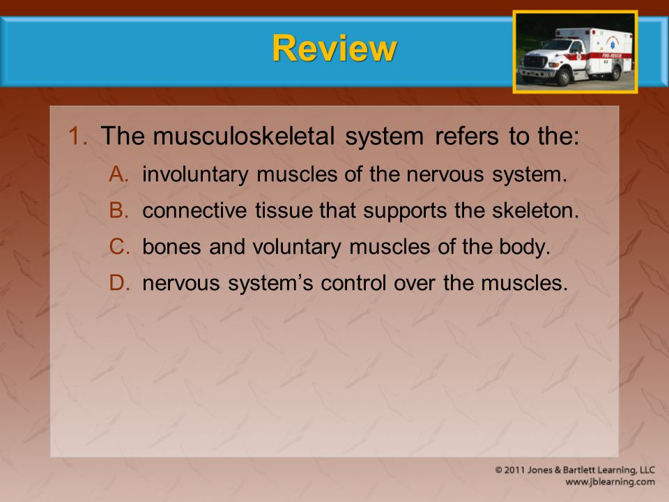 Review 1.The musculoskeletal system refers to the: A.involuntary muscles of the nervous system. B.connective tissue that supports the skeleton. C.bone